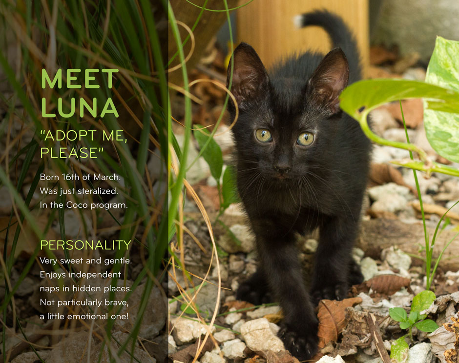 Social Media Content - Kitten Adoption Luna