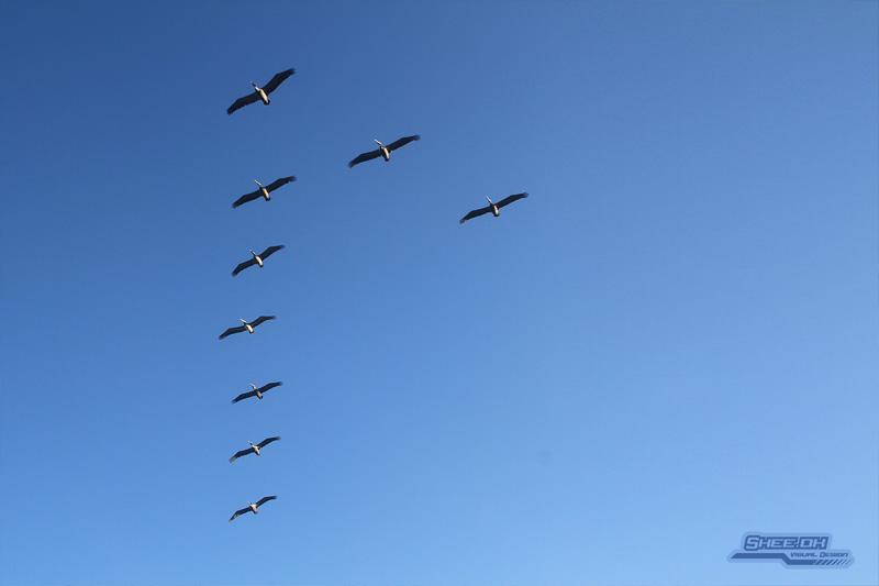 Photo Shoot - Los Frailes Pelicans