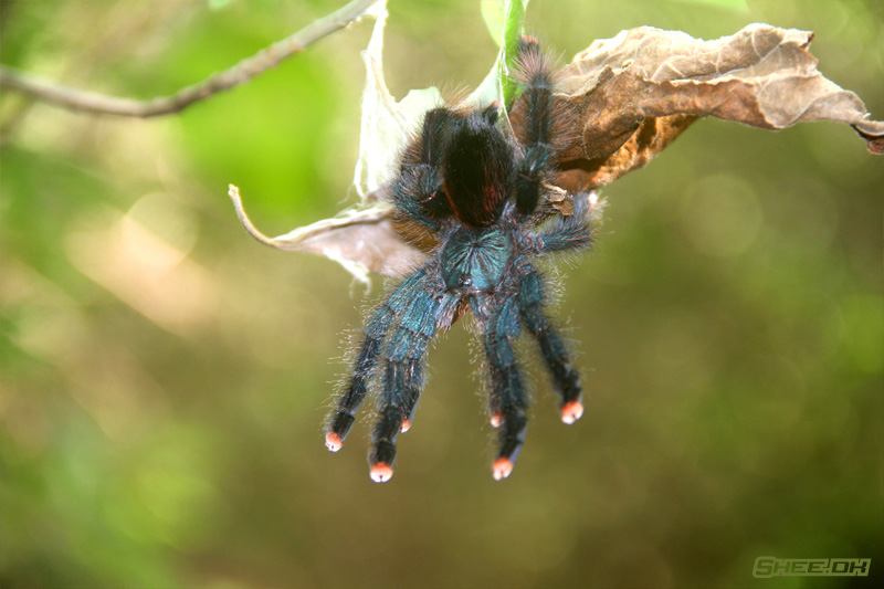 Nature's Grand Design Photography - Tarantula