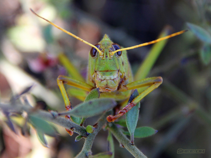 Nature's Grand Design Photography - Grasshopper