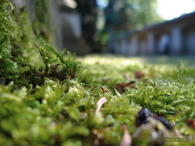 Nature's Grand Design Photography - Moss