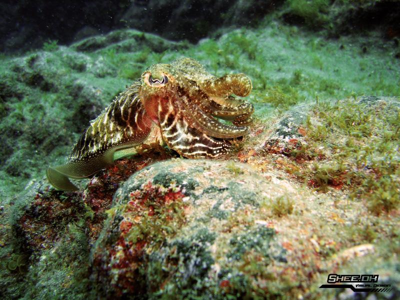 Underwater Photography - Gran Canaries