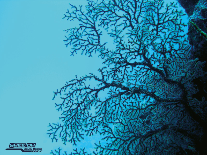 Underwater Photography - Great Berrier Reef, Australia