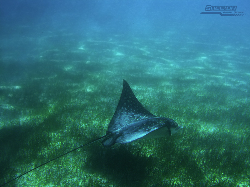 Underwater Photography - Akumal, Mexico